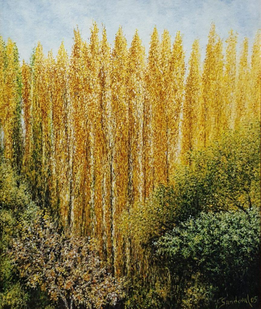 Chopos de la Mesta en otoño, en el parque natural de la Molata y los Batanes en Alcaraz, destacando los colores amarillos típicos del otoño en este árbol.