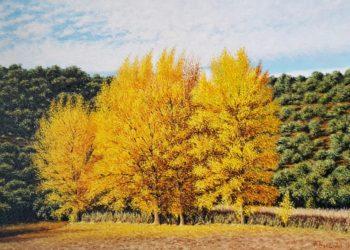 Chopos en otoño en al parque natural de las Lagunas de Ruidera, Albacete-Ciudad real, con esos colores que muestran estos árboles al incidir el sol.