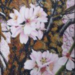 Almendro en flor con su tronco