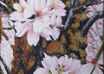 Almendro en flor con su tronco, con la diversidad de tonalidades del tronco del almendro en la época de la primavera, dando tonalidades verdosas y rojizas.