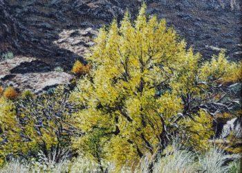 Subiendo a la Mesta refleja árboles y arbustos típicos enclavados en un paraje natural bellísimo en la sierra de Alcaraz, en la provincia de Albacete.