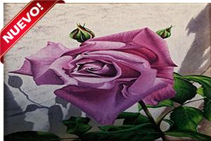 Rosa de Mayo